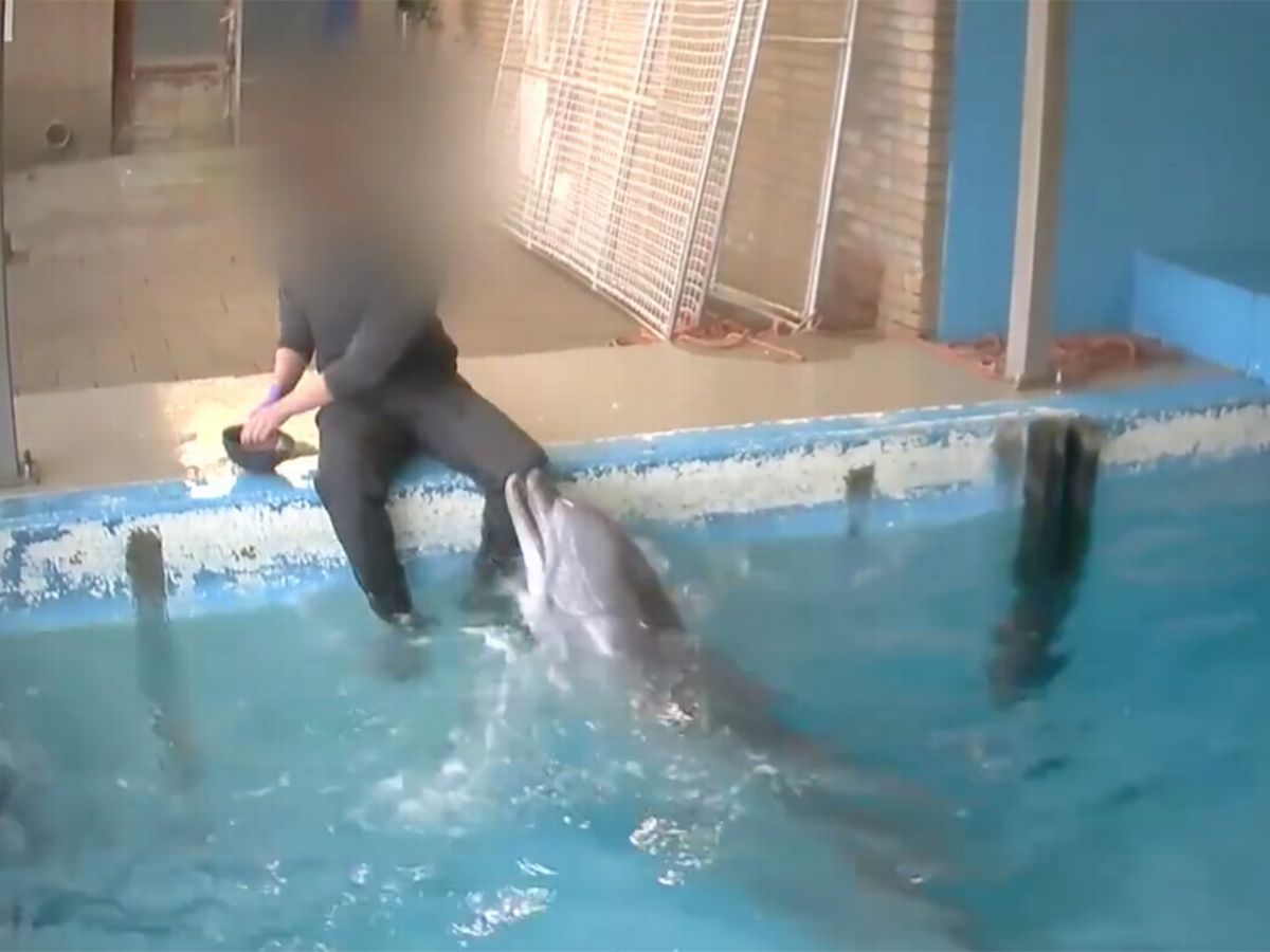 Dolphin have sex with human movies
